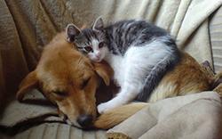 cat_dog_v2